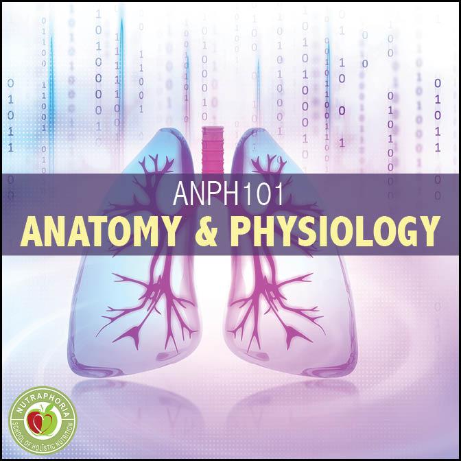Anatomy & Physiology - NutraPhoria School of Holistic Nutrition