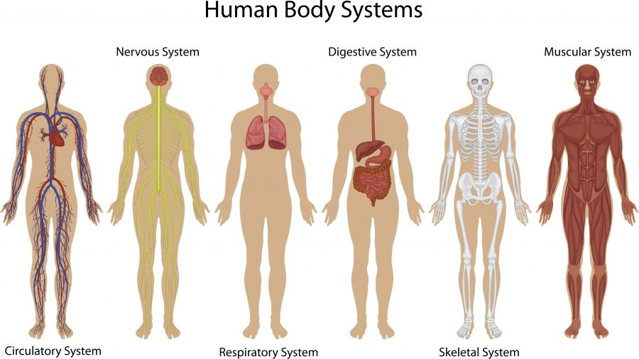 a study of the immune system of the human body