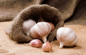 benefits of garlic nutraphoria school of holistic nutrition