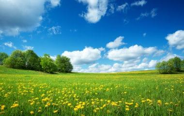 Dandelion Benefits Nutraphoria