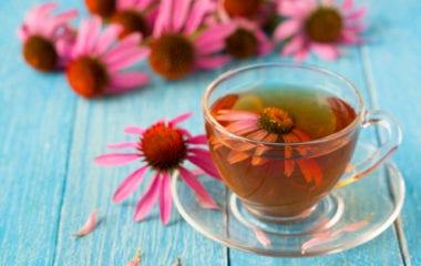 Echinacea Tea Nutraphoria